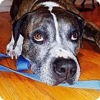 Adopt A Pet :: Duke - Lincoln, NE