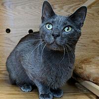 Adopt A Pet :: Jacks - Austintown, OH