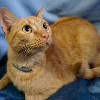 Adopt A Pet :: Jazzy - Salem, OH