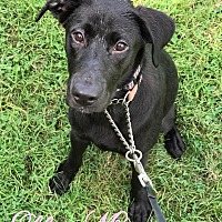 Adopt A Pet :: Ellie-Mae - Pottstown, PA