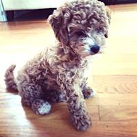 Adopt A Pet :: Kaia-Needs Help - Dover, MA