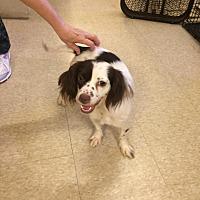 Adopt A Pet :: Ruby - Fair Oaks Ranch, TX