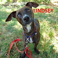 Adopt A Pet :: Lindsey - Mountain View, AR