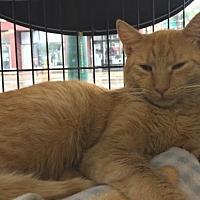 Adopt A Pet :: Simon - Columbus, OH