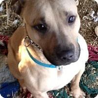 Adopt A Pet :: chewbacca - Wanaque, NJ