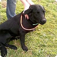 Adopt A Pet :: Reggie - Dundas, VA