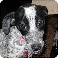 Adopt A Pet :: Baby Lucy - Oakley, CA