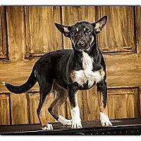 Adopt A Pet :: Vanessa - Owensboro, KY