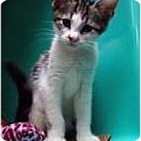 Adopt A Pet :: Felicity - Secaucus, NJ