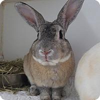 Adopt A Pet :: Mick - Williston, FL