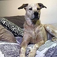 Adopt A Pet :: Cajun * NEEDS FOSTER - Guelph, ON