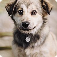 Adopt A Pet :: Nino - Portland, OR