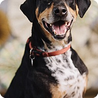 Adopt A Pet :: Maxwell - Portland, OR