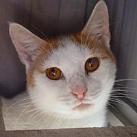 Adopt A Pet :: Fred - Hammond, LA