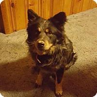 Adopt A Pet :: Tucker - Baltimore, MD