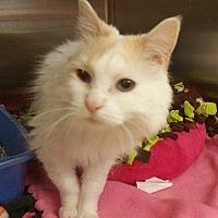 Adopt A Pet :: S'mores - Chaska, MN