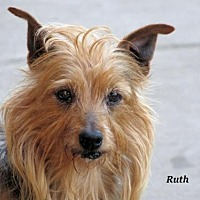 Adopt A Pet :: Ruth - Oklahoma City, OK