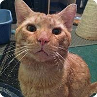 Adopt A Pet :: Percy - Bensalem, PA