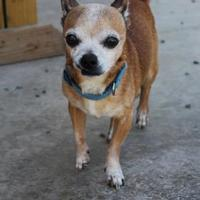 Adopt A Pet :: Chico - Shohola, PA
