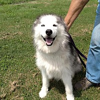 Adopt A Pet :: Samyra - Bristol, VA
