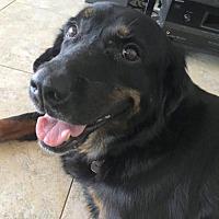 Adopt A Pet :: Miss Mia - Fort Lauderdale, FL