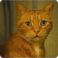 Adopt A Pet :: Teenie - Lunenburg, MA