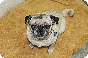 Pug Dog for adoption in Atmore, Alabama - Darla