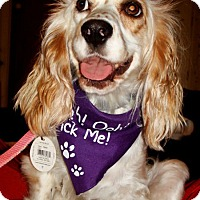 Adopt A Pet :: Kate - Sugarland, TX