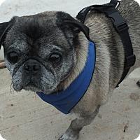 Adopt A Pet :: Tigger - Warren, NJ