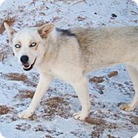 Adopt A Pet :: Rebel Rebel - Santa Fe, NM
