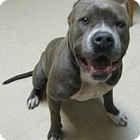 Adopt A Pet :: Jimmy - Gary, IN