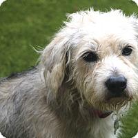 Adopt A Pet :: Grayson - Meet Me! - Norwalk, CT