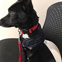 Adopt A Pet :: Max/Churro - Indianapolis, IN