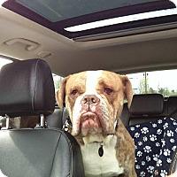 Adopt A Pet :: Sparky - Newtown, PA