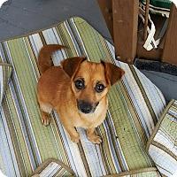 Adopt A Pet :: Nena - New Oxford, PA