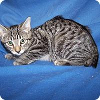 Adopt A Pet :: K-Jenny4-Jiminy - Colorado Springs, CO