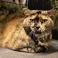 Adopt A Pet :: Cali - Encino, CA