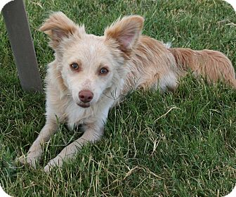Chihuahua/Terrier (Unknown Type, Small) Mix Dog for adoption in Patterson, California - Pike