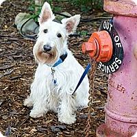 Adopt A Pet :: Barney - Niceville, FL