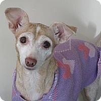 Adopt A Pet :: Lilly - Warwick, NY