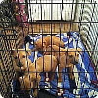 Adopt A Pet :: Litter #2 - Roaring Spring, PA