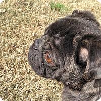 Adopt A Pet :: Morgan - Austin, TX