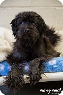 Terrier (Unknown Type, Small)/Terrier (Unknown Type, Medium) Mix Dog for adoption in Greensburg, Pennsylvania - Chewie