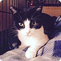 Adopt A Pet :: Sophia - Duncan, BC