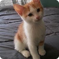 Adopt A Pet :: Patches - Irvine, CA