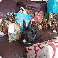 Adopt A Pet :: Julio - Conshohocken, PA