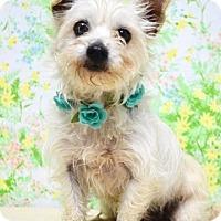 Adopt A Pet :: April - Dublin, CA