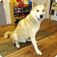 Adopt A Pet :: 17-d06-005 Duke - Fayetteville, TN