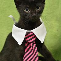 Adopt A Pet :: Rick  170989 - Atlanta, GA