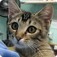 Adopt A Pet :: Mojave - Las Cruces, NM